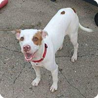 Adopt A Pet :: Toralei - Dayton, OH