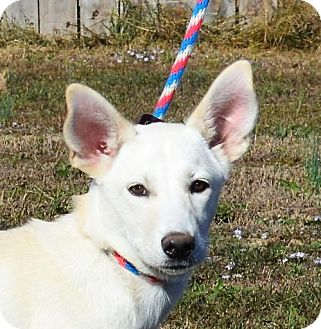 German Shepherd Dog Mix Dog for adoption in Mukwonago, Wisconsin - **UDESSA** MEET DEC 17TH!