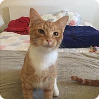 Adopt A Pet :: Tigger - Millersville, MD