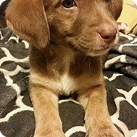 Adopt A Pet :: Marshall - Battleboro, VT