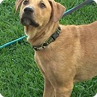 Adopt A Pet :: Watson Phillips - Barrington, RI