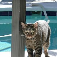 Adopt A Pet :: Acha - Lithia, FL