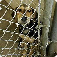 Adopt A Pet :: Allie - Sagaponack, NY