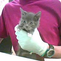 Adopt A Pet :: A277349 - Conroe, TX