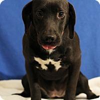 Adopt A Pet :: Bessie - Waldorf, MD