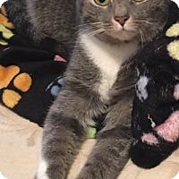 Adopt A Pet :: Marie - Covington, KY