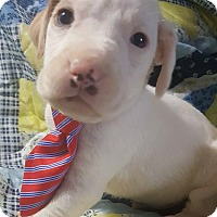 Adopt A Pet :: Andy - Hagerstown, MD