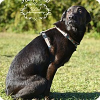 Adopt A Pet :: Thelma - Fort Valley, GA