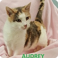 Adopt A Pet :: Audrey - Knoxville, IA