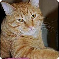 Adopt A Pet :: Frank - Monroe, GA