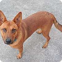 Adopt A Pet :: Rose - Ormond Beach, FL