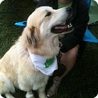Adopt A Pet :: Effie - Foster, RI