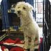Adopt A Pet :: Shaggy - Phoenix, AZ