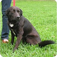Adopt A Pet :: Dylan - Kingwood, TX