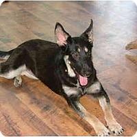 Adopt A Pet :: Sasha - Glastonbury, CT
