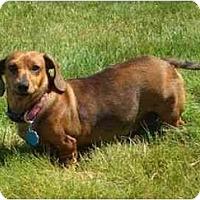 Adopt A Pet :: Sallie - kennebunkport, ME