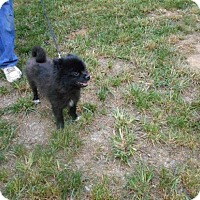 Adopt A Pet :: Pepper -Adopted! - Kannapolis, NC