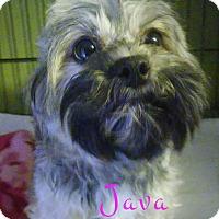 Adopt A Pet :: Java - House Springs, MO