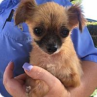 Adopt A Pet :: Walter - Sacramento, CA