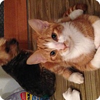 Adopt A Pet :: Sammi - Ann Arbor, MI
