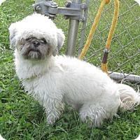 Adopt A Pet :: Tink - Elmwood Park, NJ