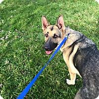 Adopt A Pet :: Thor - Zanesville, OH