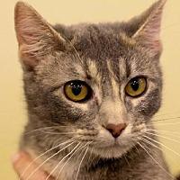 Adopt A Pet :: Felicity - Eldora, IA