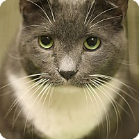 Adopt A Pet :: Sparky - Norwalk, CT