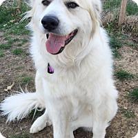 Adopt A Pet :: Max - Tulsa, OK