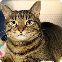 Adopt A Pet :: Shanti - Sarasota, FL
