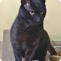 Adopt A Pet :: Bruce - Salisbury, MA