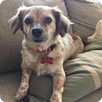 Adopt A Pet :: Patches - San Diego, CA