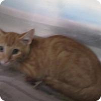 Adopt A Pet :: Richie - North Richland Hills, TX