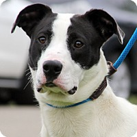 Adopt A Pet :: Larz - Harrison, NY