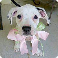 Adopt A Pet :: Winnie - Baton Rouge, LA