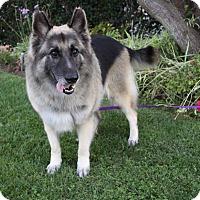 Adopt A Pet :: AMY - Adoption Pending - Newport Beach, CA