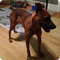 Adopt A Pet :: Dobie - Greensboro, GA