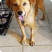 Adopt A Pet :: Satin - Racine, WI