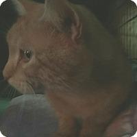 Adopt A Pet :: Henry - Macomb, IL