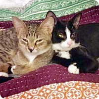 Adopt A Pet :: Lulu and Lolo, Enchanting Sisters - Brooklyn, NY