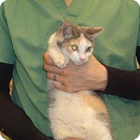 Adopt A Pet :: Wilma - Wildomar, CA