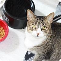 Adopt A Pet :: Mittens - Covington, LA