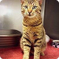 Adopt A Pet :: Tompkins - Casa Grande, AZ