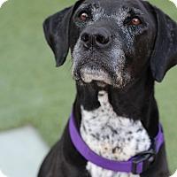 Adopt A Pet :: Pepper - Burbank, CA