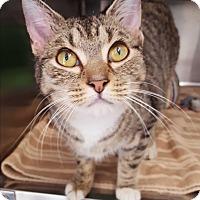 Adopt A Pet :: Cheerio - Umatilla, FL