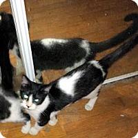Adopt A Pet :: Clover - Morganton, NC