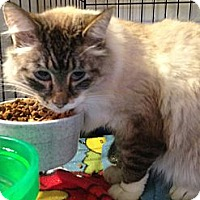 Adopt A Pet :: Connie - Wenatchee, WA