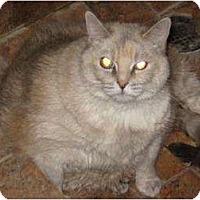 Adopt A Pet :: Agnes - Phoenix, AZ