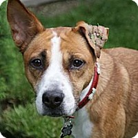 Adopt A Pet :: Sweetie - Rockaway, NJ