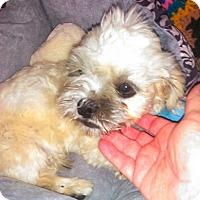 Adopt A Pet :: Marshmallow - Phoenix, AZ